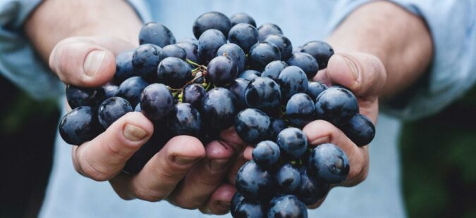 The Benefits Of Efficient Water Management In The Wine Industry